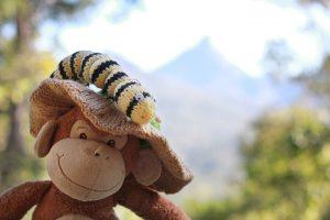 Monkey with grub in front of Mt Uki, NSW